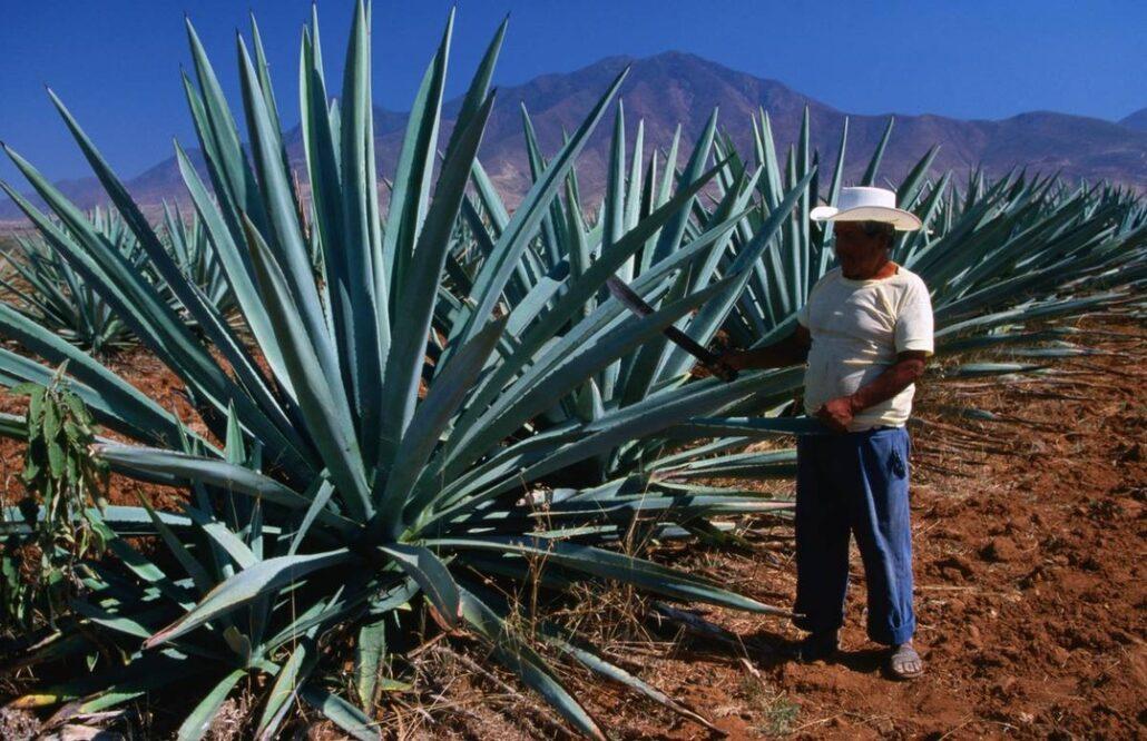 Mexico: Exploring the homeland of mezcal http://ow.ly/cNsU30pcGDC